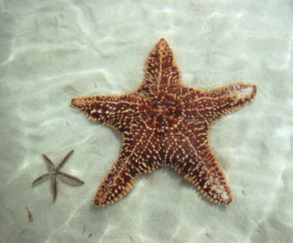 2-starfish